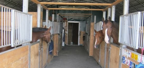 : Horse stables